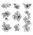 set of vintage flowers vector image