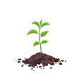 sprout seedling shoot germination in pile dirt vector image