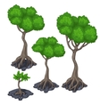 Stages of growing tropical tree four icon vector image vector image
