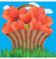 Basket of tulips2 vector image vector image