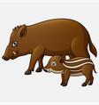 cartoon wild boar and piglet vector image