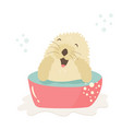funny otter taking shower sitting in a wash-basin vector image