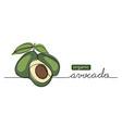 organic avocado doodle sketch one vector image