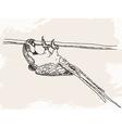 Sketch parrot