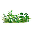 herbal green decor beauty nature ferns vector image vector image