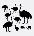 ostrich bird poultry animal silhouette vector image vector image