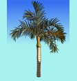 painted small palm tree with fluffy leaves vector image vector image