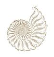 sketch seashells vector image