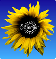 sunflower summer concept vector image vector image