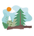 camping pine tree mountain trunk sun clouds sky vector image