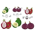 Cartoon sweet exotic fig feijoa and pitaya fruits vector image vector image
