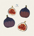 fig drawing hand drawn fruit and sliced piece vector image vector image