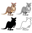 set kangaroo character vector image vector image