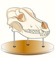 skull of the dog on the stand anatomy an exhibit vector image