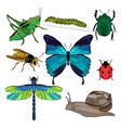 colorful drawing insects collection vector image vector image