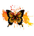 decorative butterfly with vector image