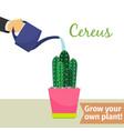 hand watering cereus plant vector image