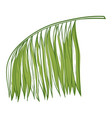 palm green tropical branch natural exotic plant vector image