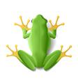 green frog vector image