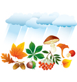 Autumn natural objects vector image vector image