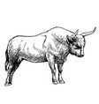 hand drawn of bull vector image