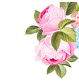 blooming rose garland vector image