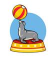 cartoon seal circus vector image