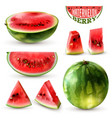 watermelon realistic set vector image