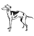 decorative standing portrait of italian greyhound vector image vector image