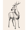 Deer hand drawn sketch vector image vector image