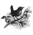 european wren vintage vector image vector image