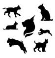 Lynx set vector image vector image