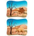 two scenes of camel in desert vector image vector image