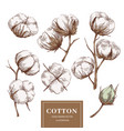 cotton branch collection vector image vector image