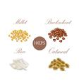 Groats Millet buckwheat rice oatmeal vector image vector image
