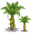 Pineapple palm tree on a white background vector image vector image