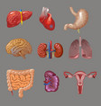 cartoon internal human organs collection vector image vector image
