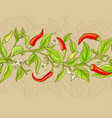 cayenne pepper pattern vector image