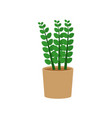 zamioculcas potted flat icon indoor plant flower vector image vector image
