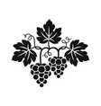 grape vine and bunch grapes vector image