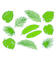tropical bright green palm leaves branches set vector image