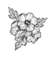 hibiscus flower engraving vector image vector image