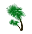 Two green palm trees at an angle isolated on white vector image vector image