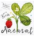 Watercolor wild strawberry vector image