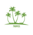 tropical palm trees island silhouettes vector image