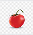 big red fresh tomato vector image vector image