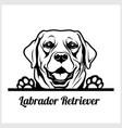 dog head labrador retriever breed black vector image vector image