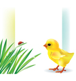Grass and baby chick background vector image vector image