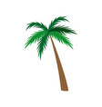 palm tree natural tropical botanical vector image vector image