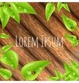 Green leaves frame vector image